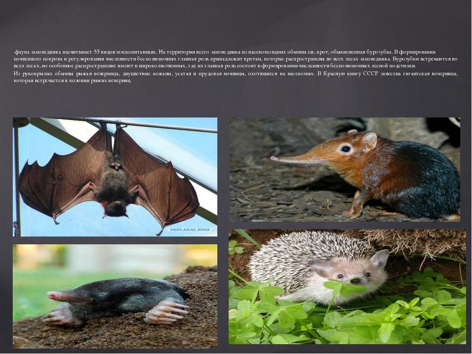 фауна заповедника насчитывает 55 видов млекопитающих. На территории всего за...