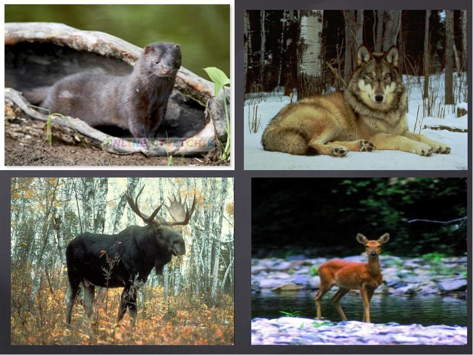 застывших животные с картинками в татарстане уже сравнивали вес