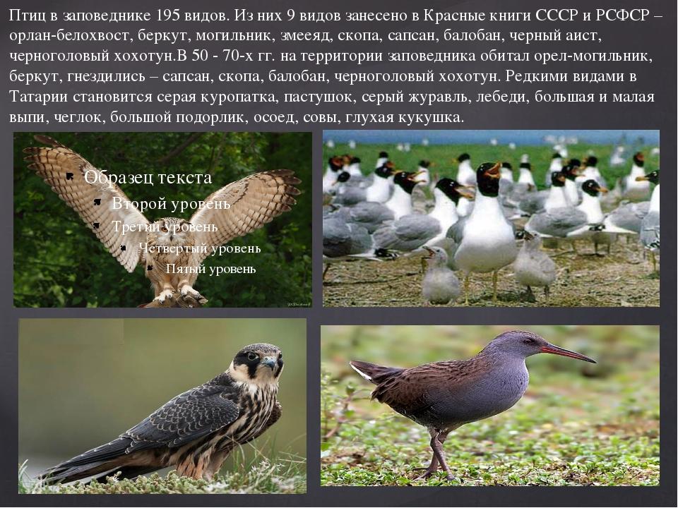 Птиц в заповеднике 195 видов. Из них 9 видов занесено в Красные книги СССР и...