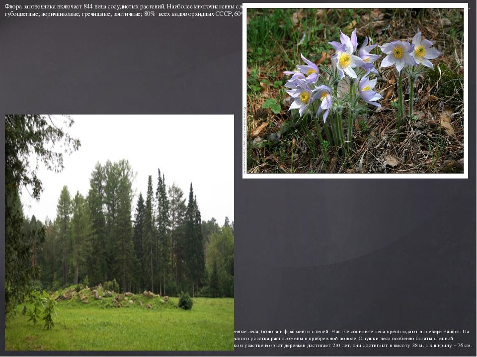 Флора заповедника включает 844 вида сосудистых растений. Наиболее многочислен...