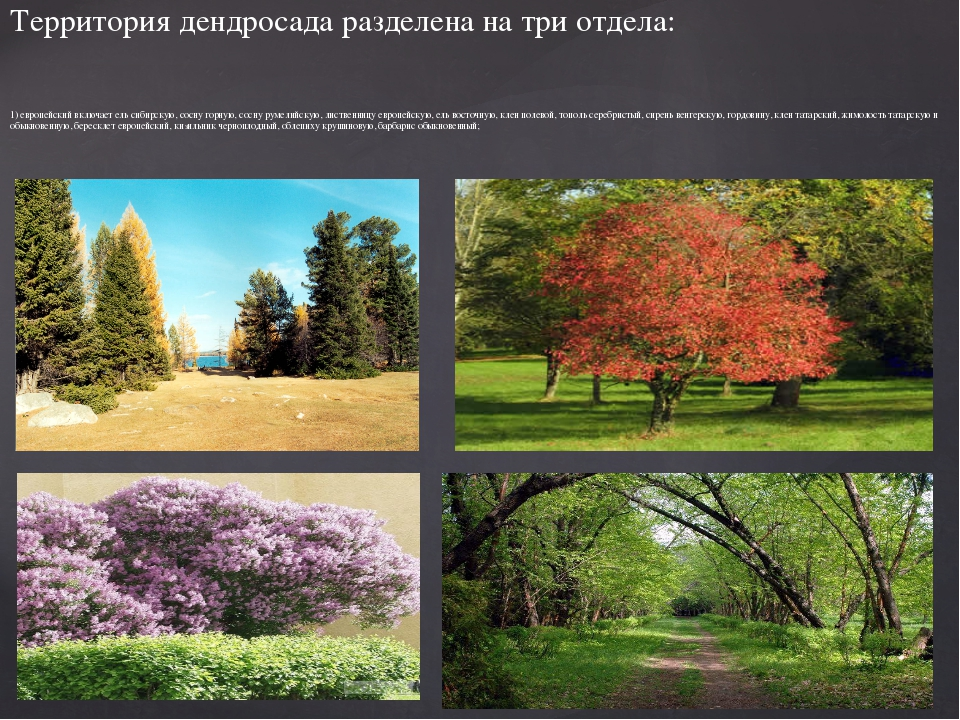 1) европейский включает ель сибирскую, сосну горную, сосну румелийскую, листв...