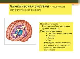 Лимбическая система – совокупность ряду структур головного мозга Принимает уч