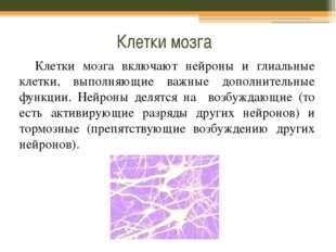 Клетки мозга Клетки мозга включают нейроны и глиальные клетки, выполняющие ва