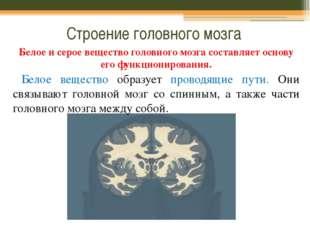 Строение головного мозга Белое и серое вещество головного мозга составляет ос