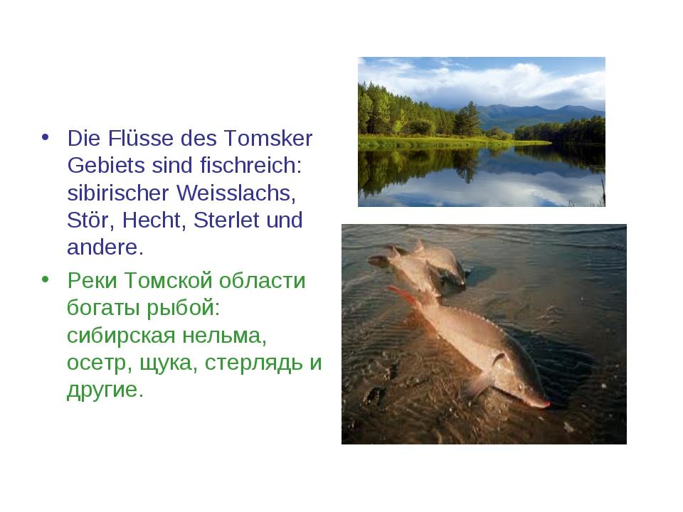 Die Flüsse des Tomsker Gebiets sind fischreich: sibirischer Weisslachs, Stör,...