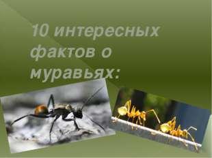 10 интересных фактов о муравьях: