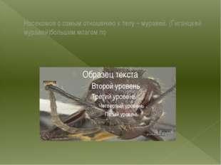 Насекомое с самым отношению к телу – муравей. (Гиганцкей муравей)большим мозг