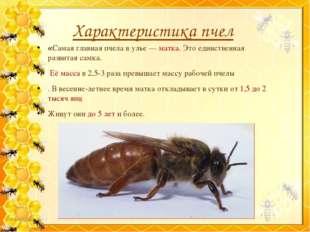 Характеристика пчел «Самая главная пчела в улье — матка. Это единственная раз