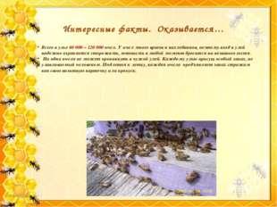Всего в улье 60 000 – 120 000 пчел. У пчел много врагов и нахлебников, поэто