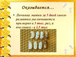 Личинка матки за 5 дней своего развития увеличивается примерно в 3 тыс. раз,