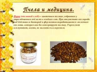 Пчела и медицина. Перга (пчелиный хлеб)— цветочная пыльца ,собранная у утрамб