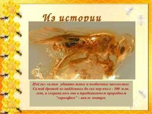 Из истории Пчёлы- самые удивительные и необычные насекомые. Самой древней из