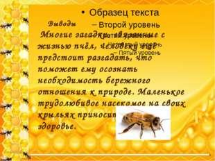 Выводы Многие загадки, связанные с жизнью пчёл, человеку ещё предстоит ра