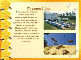 Пчелиный дом У каждой пчелиной семьи есть свой отдельный домик — улей. В нем