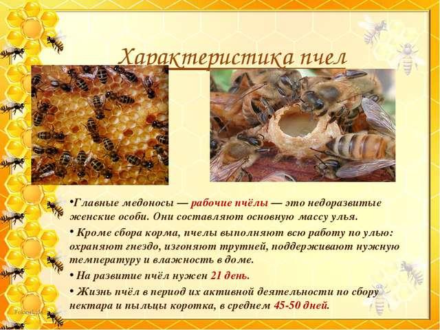 Главные медоносы — рабочие пчёлы — это недоразвитые женские особи. Они соста...