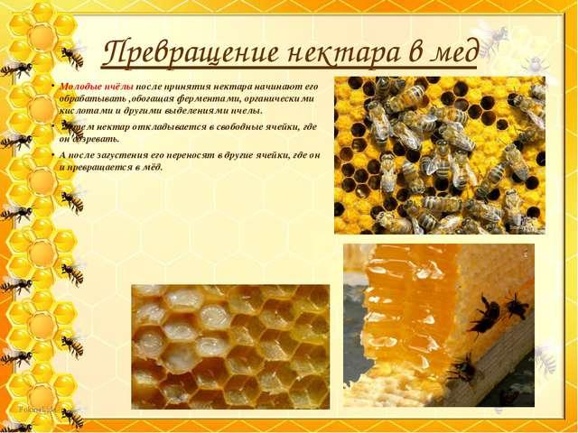 Молодые пчёлы после принятия нектара начинают его обрабатывать ,обогащая ферм...