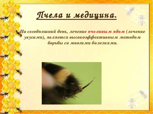 Пчела и медицина. На сегодняшний день, лечение пчелиным ядом (лечение укусами...