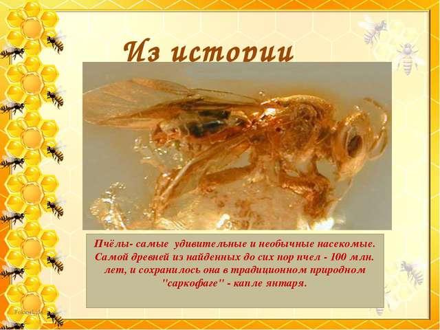 Из истории Пчёлы- самые удивительные и необычные насекомые. Самой древней из...