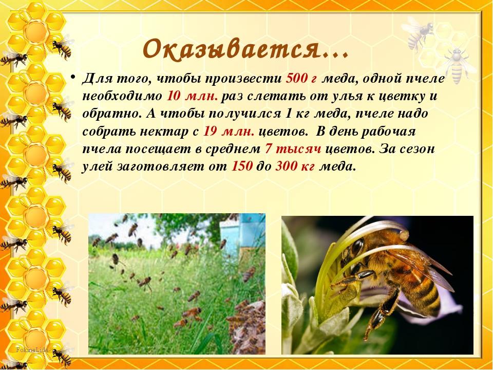 Для того, чтобы произвести 500 г меда, одной пчеле необходимо 10 млн. раз сле...