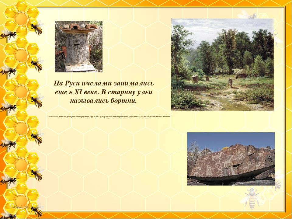 На Руси пчелами занимались еще в XI веке. В старину ульи назывались бортни. А...