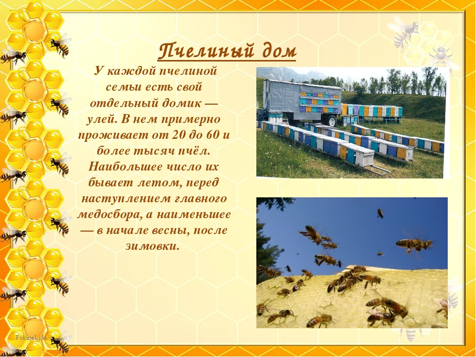 Пчелиный дом У каждой пчелиной семьи есть свой отдельный домик — улей. В нем...