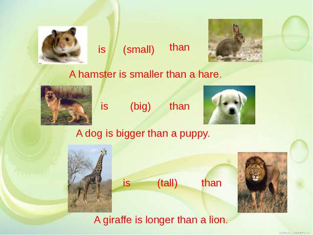 is (small) than is (big) than is (tall) than A hamster is smaller than a har...