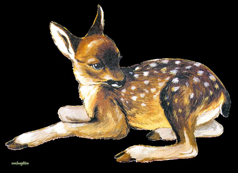 картинка оленёнок для детей