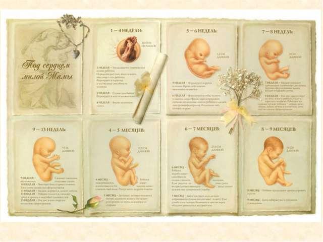 Происходит образование мозга и нервной системы малыша.