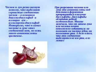 Чеснок и лук резко пахнут потому, что выделяют сернистые соединения: чеснок –