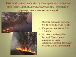 Низовой пожар- горение сухого травяного покрова или подстилки, подлеска (куст