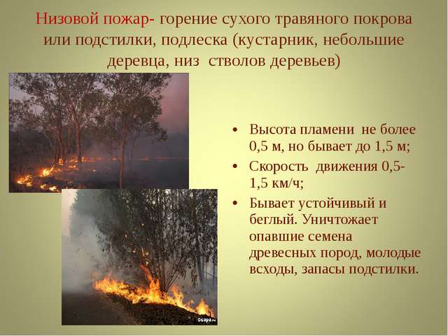 Низовой пожар- горение сухого травяного покрова или подстилки, подлеска (куст...