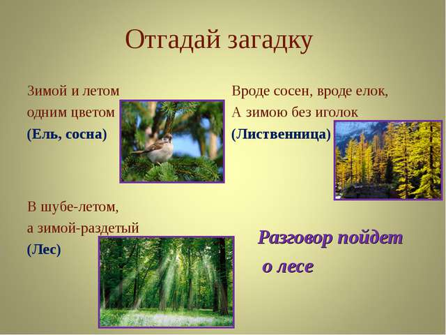 Отгадай загадку Зимой и летом одним цветом (Ель, сосна) Вроде сосен, вроде ел...