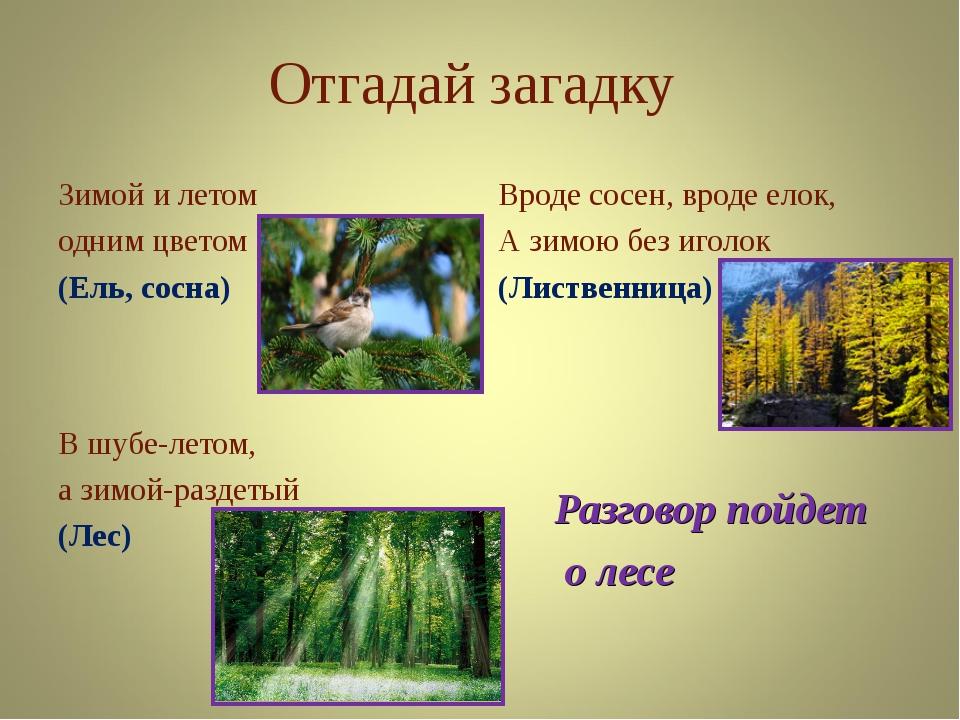 интересно загадки про лес с картинками этого отслеживали заказ