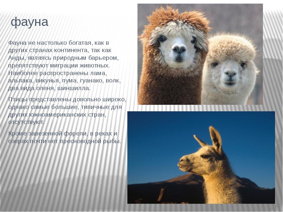 фауна Фауна не настолько богатая, как в других странах континента, так как Ан...