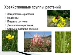 Лекарственные растения Медоносы Пищевые растения Декоративные растения Сорные