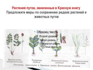 Растения лугов, занесенные в Красную книгу Предложите меры по сохранению редк