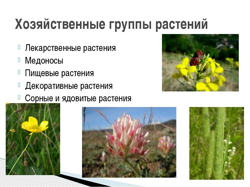 Лекарственные растения Медоносы Пищевые растения Декоративные растения Сорные...