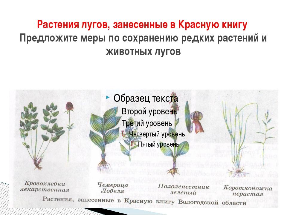 Растения лугов, занесенные в Красную книгу Предложите меры по сохранению редк...