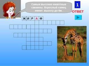 1 Самые высокие животные саванны. Взрослый самец имеет высоту до 6м. ОТВЕТ