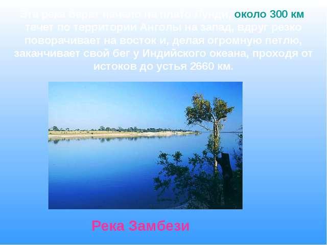 Эта река берет начало на плато Лунди, около 300 км течет по территории Анголы...