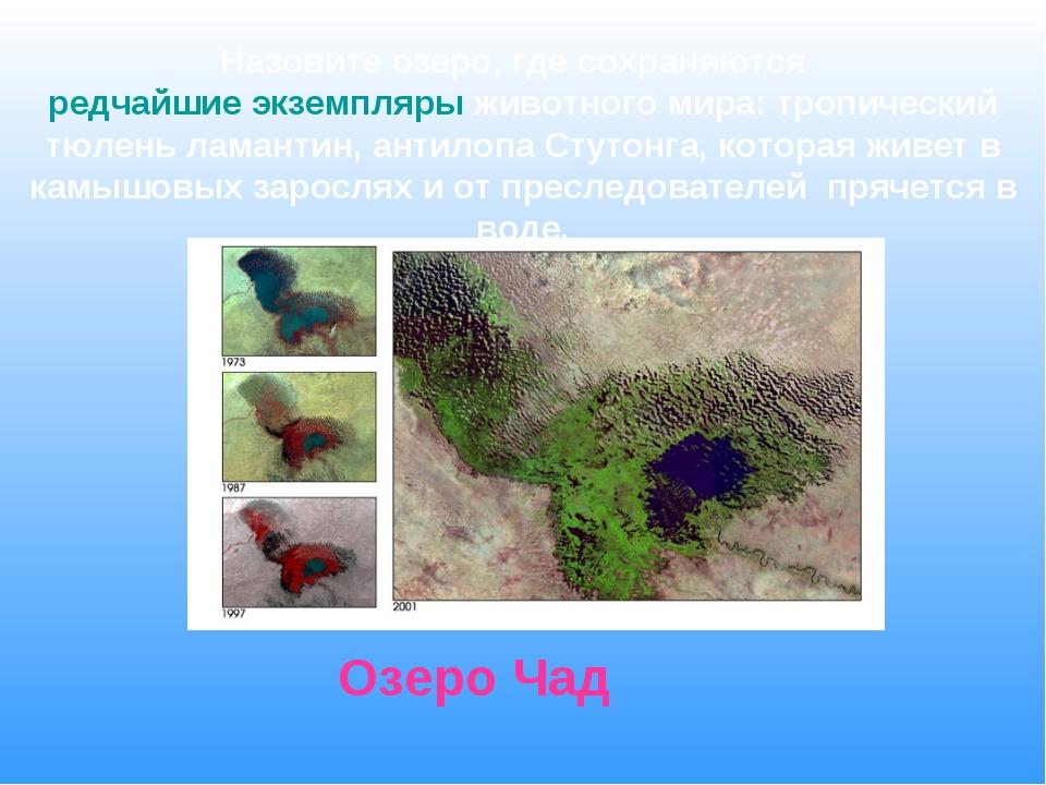 Назовите озеро, где сохраняются редчайшие экземпляры животного мира: тропичес...