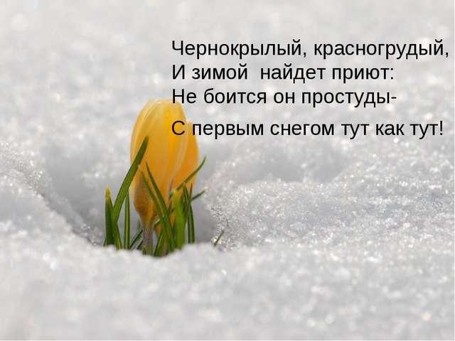 Чернокрылый, красногрудый, И зимой найдет приют: Не боится он простуды- С пер...