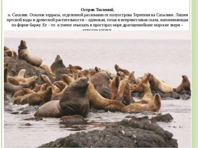 Остров Тюлений. о. Сахалин. Осколок террасы, отделенной разломами от полуостр...