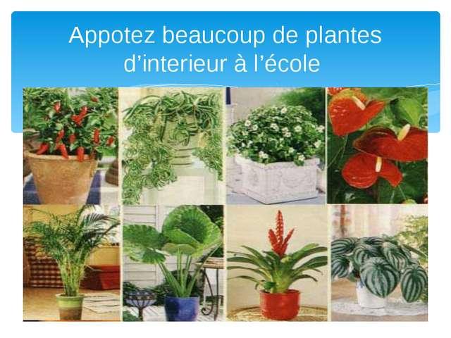 Appotez beaucoup de plantes d'interieur à l'école
