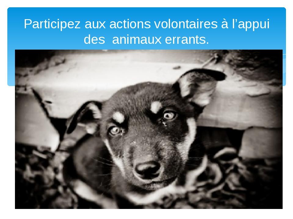 Participez aux actions volontaires à l'appui des animaux errants.