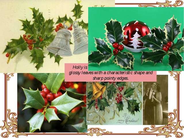 Holly is a bush with shiny red berries and glossy leaves with a characterist...