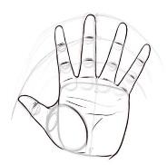 C:\Users\Светлана\Desktop\kak-narisovat-ruku-cheloveka-karandashom-6.jpg