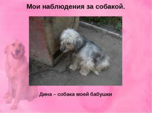 Мои наблюдения за собакой. Дина – собака моей бабушки