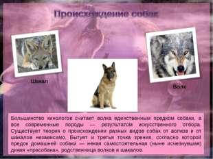 Большинство кинологов считает волка единственным предком собаки, а все соврем