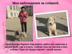 Мои наблюдения за собакой. Герасенкова Лариса Сергеевна, работала завучем в ш